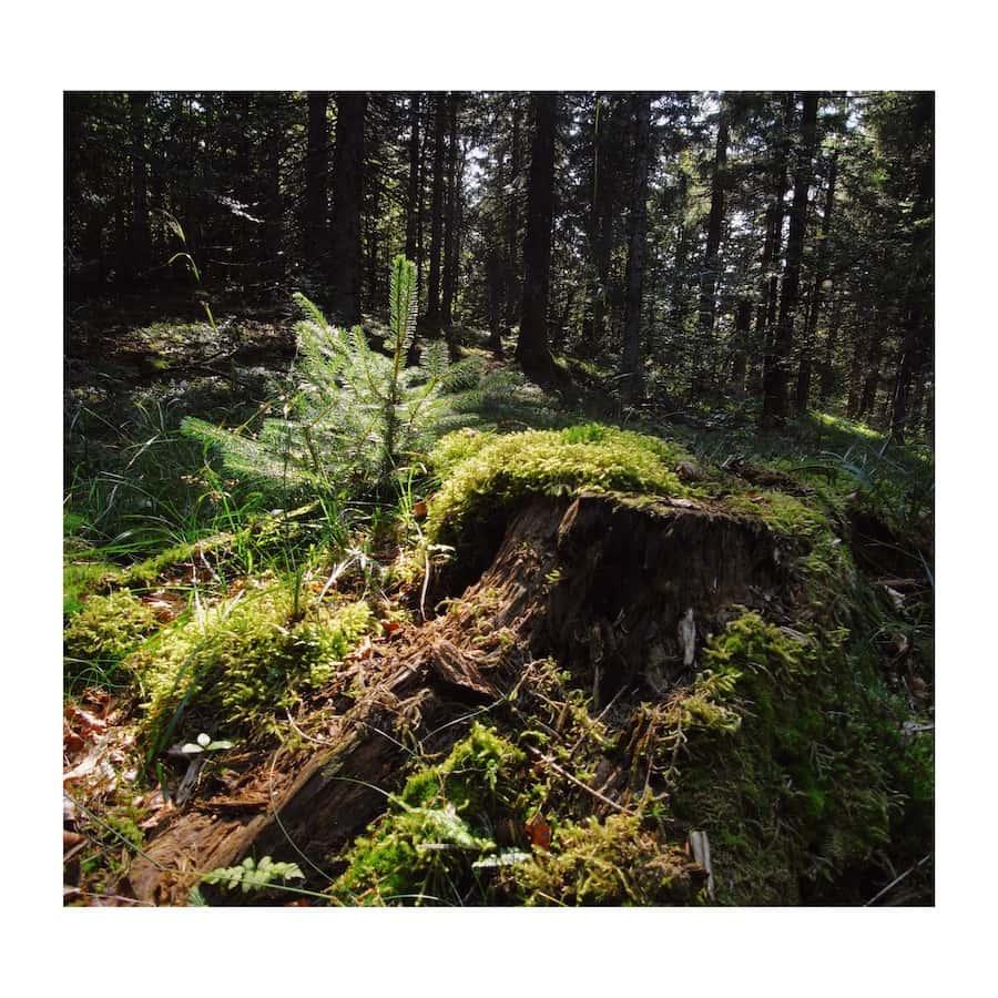 produit traitement bois exterieur Quel bois choisir en extérieur ? - Mobilier du0027extérieur en mélèze - Monin  Bois SAS