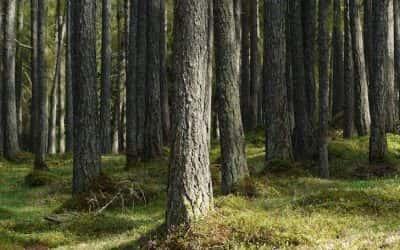 Définition : les 5 classes du bois
